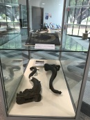 Items from the steamship 'Brinawarr', sunk during the cyclone and recovered in 2009.